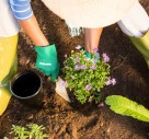 How Gardening Can Improve Your Mood Through Colour