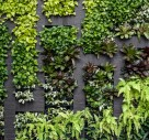 Have You Considered A Vertical Garden?