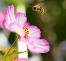 8 Top Gardening Tips To Help Encourage Insects