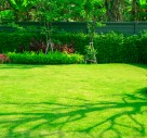 Why You Need To Take Care Of Your Lawn
