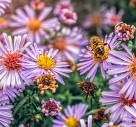 What Is A Pollinator Garden?