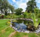 Garden Ponds 'Help UK Wildlife'