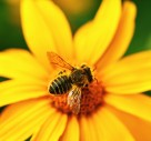 Gardeners Called To Protect Bees This Summer