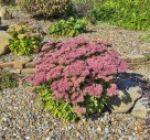 Are Rockeries Seeing A Revival?