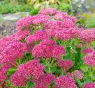 What Makes A Good Autumn Garden?
