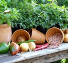 Time To Prep To Grow Your Own Veg?