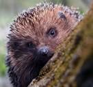 'Consider Wildlife' When Choosing Gardening Tools