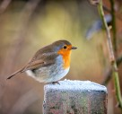 Birds To Spot In Your Garden This Christmas