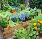 Tips For Getting Your Vegetable Garden Growing