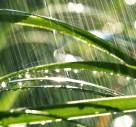 Have You Heard Of A Rain Garden?